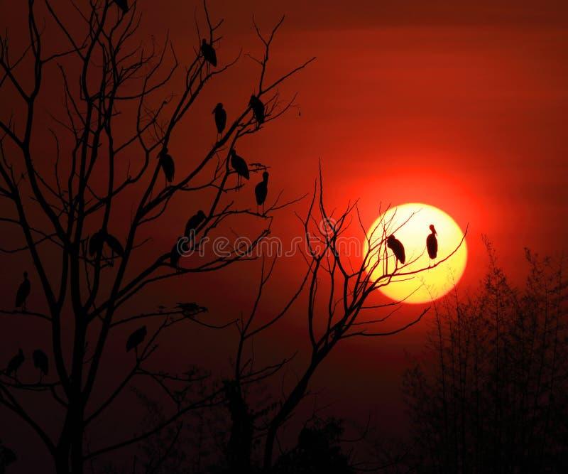 Familia y salida del sol de la cigüeña de Openbill fotografía de archivo