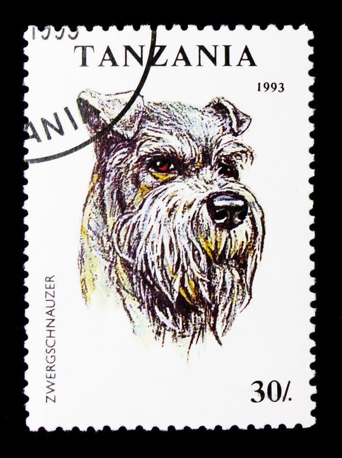 Familiaris för miniatyrSchnauzerCanislupus, hundkapplöpningserie, circa 1993 arkivbilder