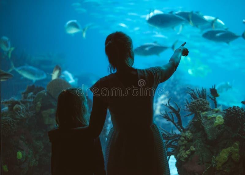 Familie in aquarium royalty-vrije stock fotografie