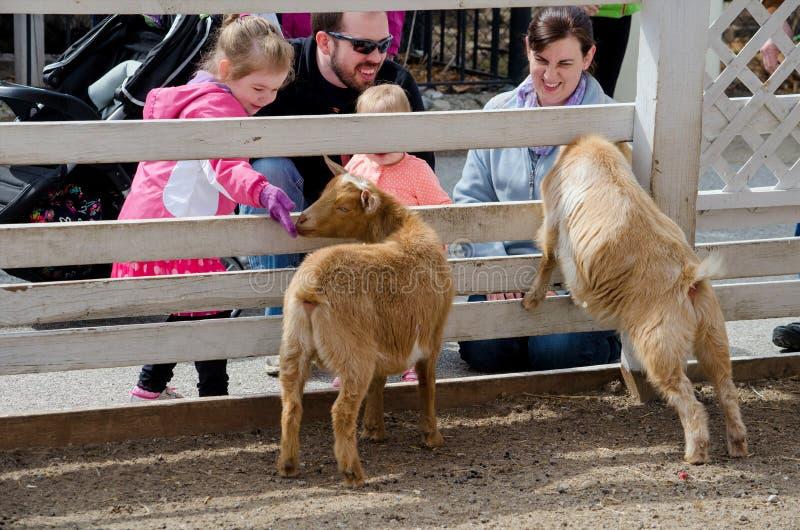 Familie bij een petting dierentuin royalty-vrije stock afbeelding