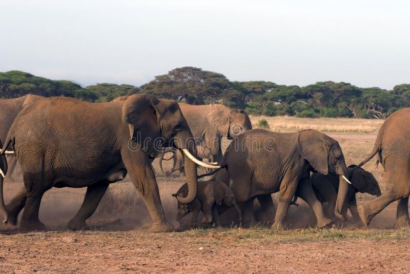 Familie der Elefanten im wilden stockfotografie