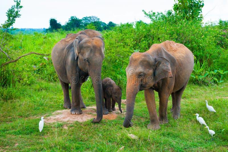 Download Familie Der Elefanten Mit Jungen Eine Stockbild - Bild von tourismus, asien: 26351641