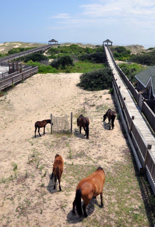 Familie der wilden Pferde, die auf Strand weiden lassen lizenzfreie stockfotografie