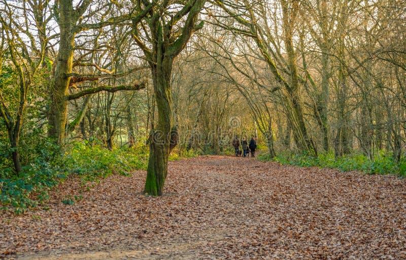 Familie, die in den Wald auf einem winter& x27 geht; s-Nachmittag stockfotografie
