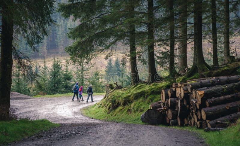 Familie, die im Wald wandert lizenzfreie stockfotografie