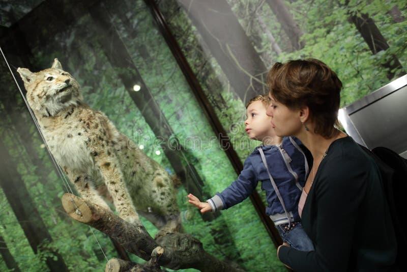 Familie die tijger bekijken stock fotografie