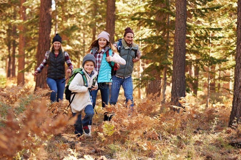 Familie die van stijging in een bos, Grote Beer genieten, Californië, de V.S. royalty-vrije stock afbeeldingen