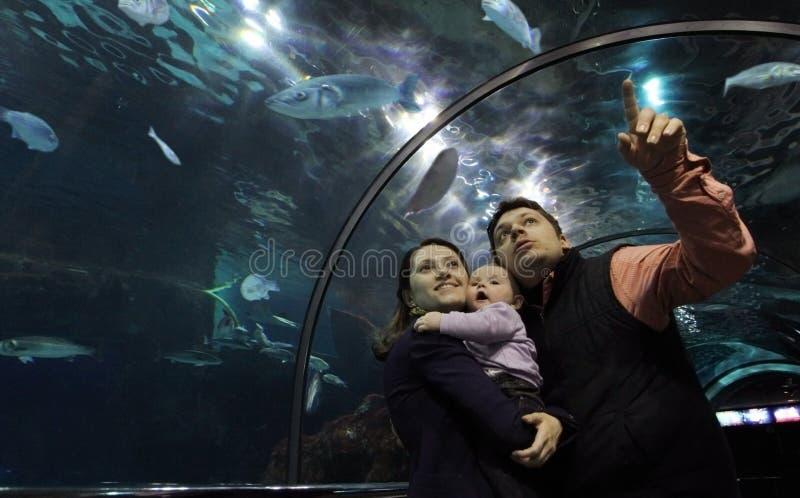 Familie in het Aquarium van het Glas royalty-vrije stock foto