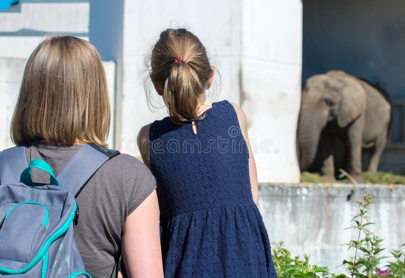 Familie het bezoeken dierentuin stock fotografie