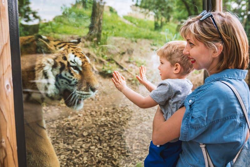 Familie het letten op tijger door het venster stock fotografie