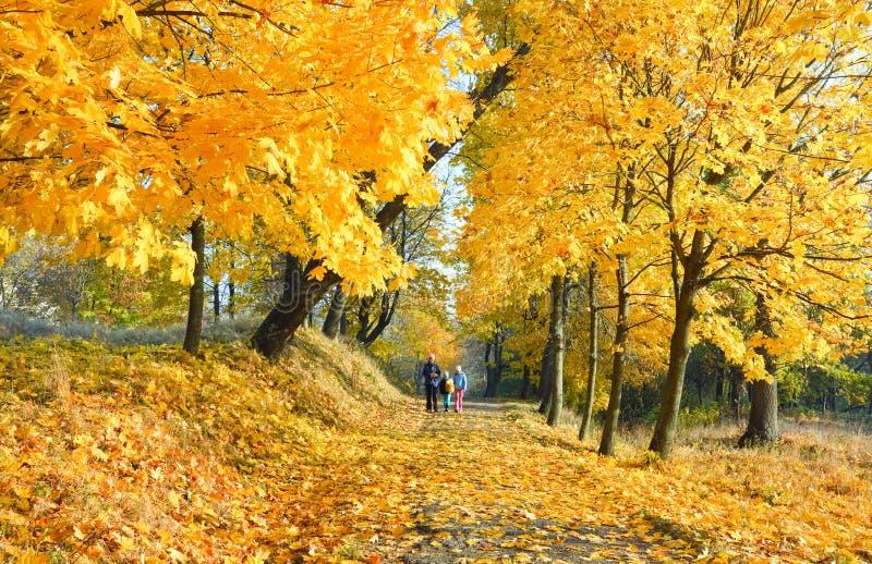 Familie in het park van de de herfstesdoorn royalty-vrije stock afbeeldingen