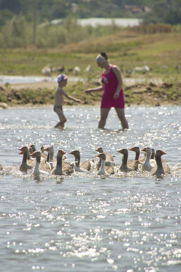 Familie im Wasser mit Gänsen
