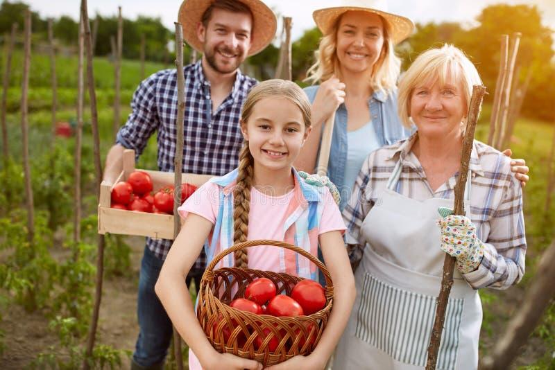 Familie mit organisch produzierten Tomaten stockbilder