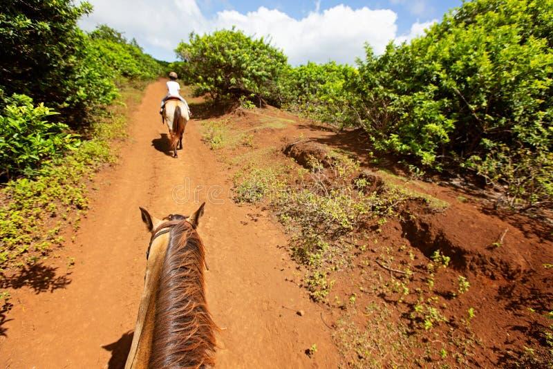 Familie paardrijden stock afbeelding