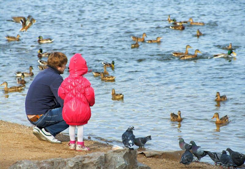 Familie und Enten stockbild
