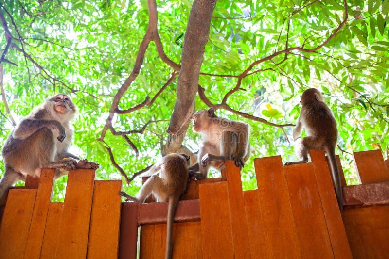 familie van de aap zit op het hek royalty-vrije stock foto