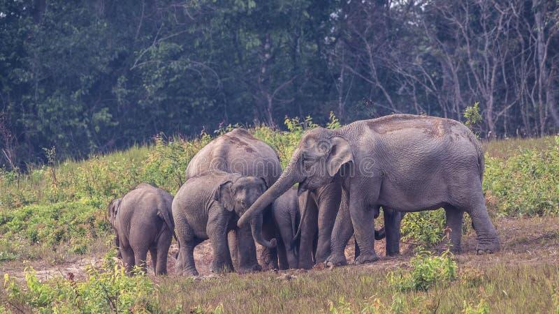 Familie van Indische olifanten stock afbeelding