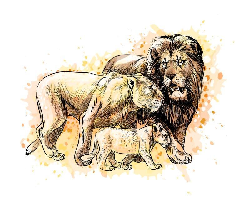 Familie van leeuwen van een plons van waterverf royalty-vrije illustratie
