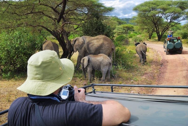 Familie van olifanten in het Nationale Park van Meermanyara, Tanzania, Afr stock fotografie