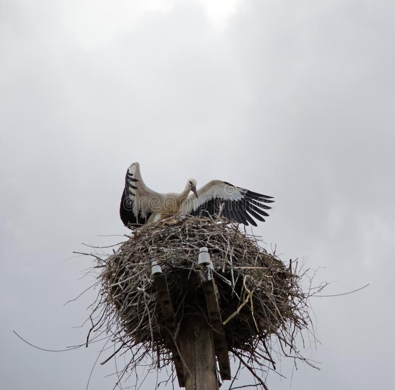 Familie van ooievaars in het nest stock afbeeldingen