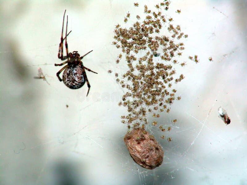 Familie van spinnen. stock afbeeldingen