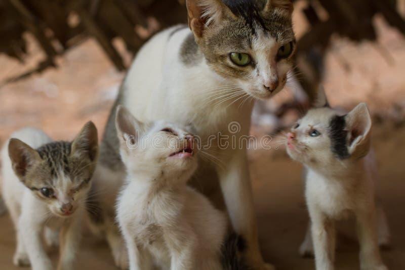 Familie van wilde katten stock foto