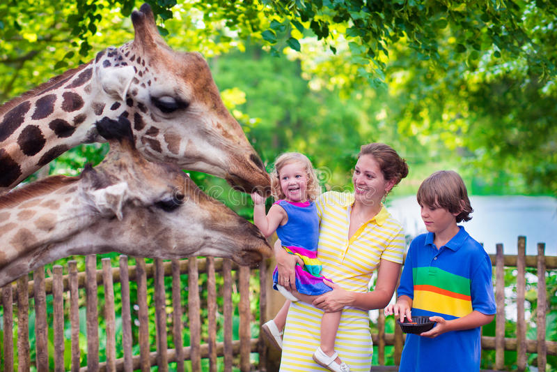 Familie voedende giraf in een dierentuin stock foto's