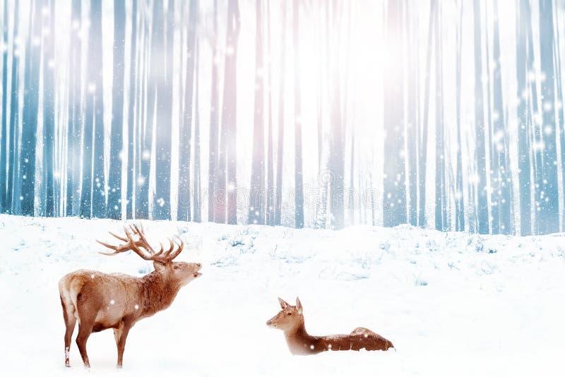 Familie von edlen Rotwild in einem schneebedeckten blauen Winterwaldweihnachtstraumbild lizenzfreie stockfotografie