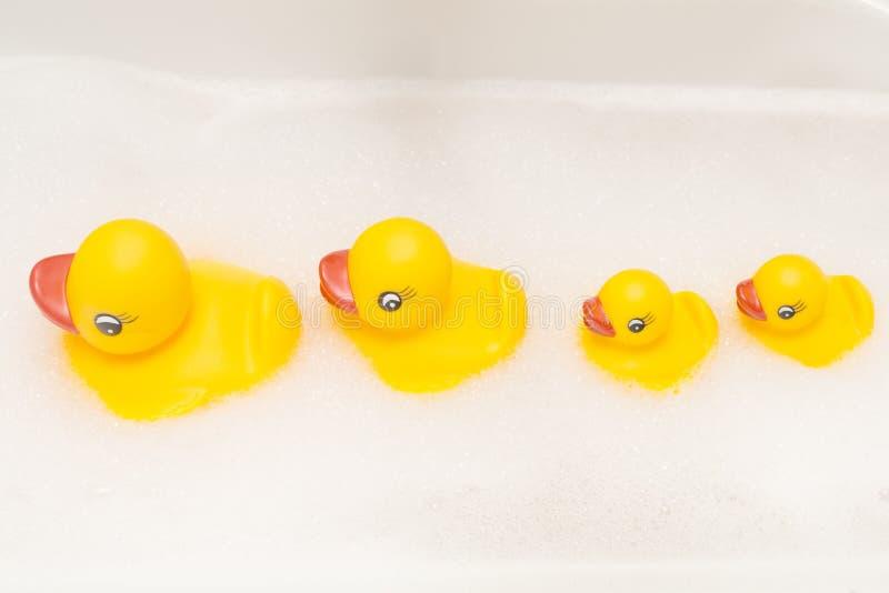 Familie von Enten in einer Linie lizenzfreie stockfotos