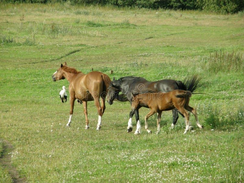 Familie von Pferden auf einem Weg stockfotos