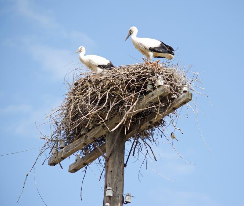 Familie von St?rchen im Nest stockfotografie