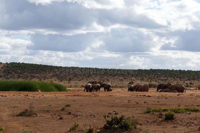 Familiedag - Afrikaanse Bush-Olifant royalty-vrije stock afbeelding
