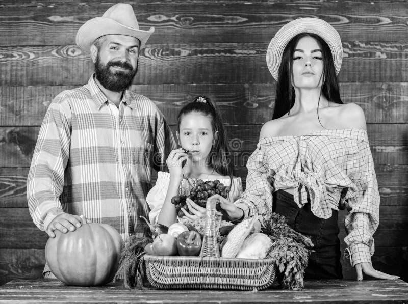 Familielandbouwers met oogst houten achtergrond De ouders en de dochter vieren de mand van de pompoengroenten van de oogstvakanti stock foto