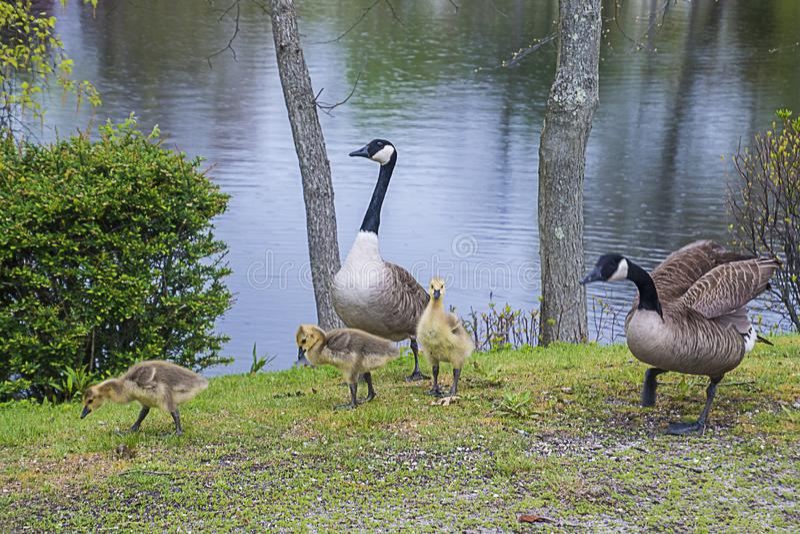 Familien-Ausflug 2070 lizenzfreies stockbild