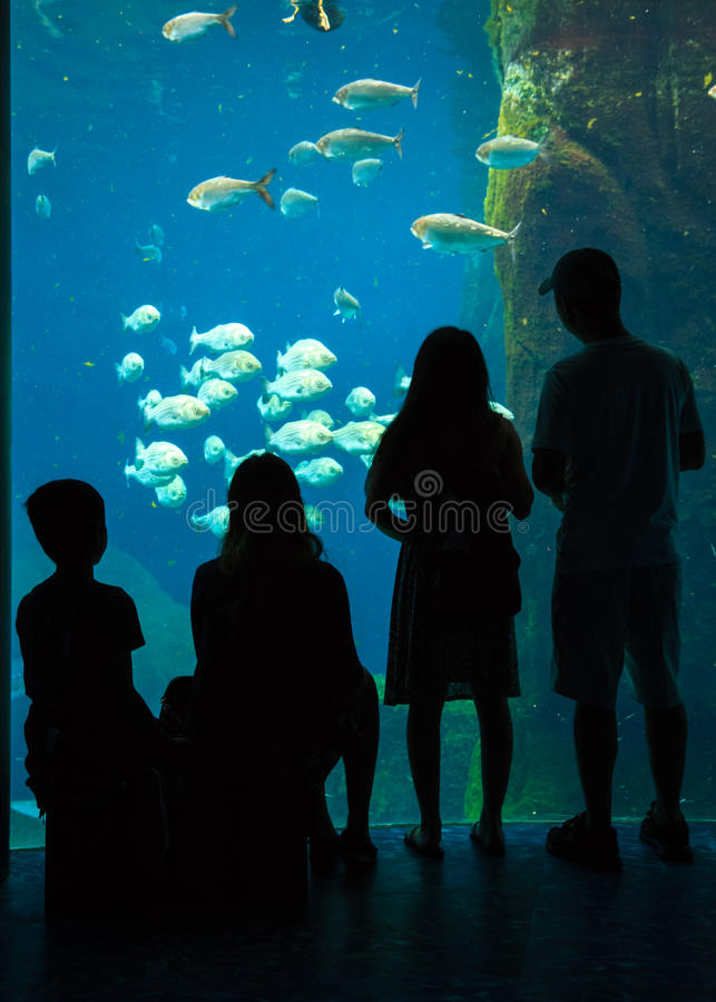 Familien-Ausflug am Aquarium lizenzfreies stockbild