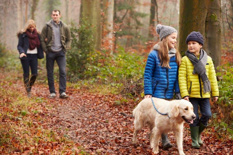Familien-gehender Hund durch Winter-Waldland stockfotos