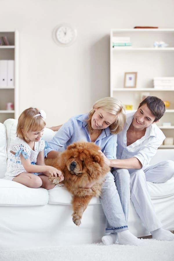 Familien- und Haushaltshaustier stockfoto