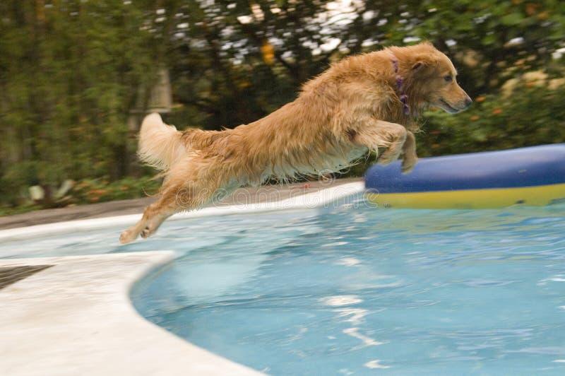 Familienhund lizenzfreie stockbilder