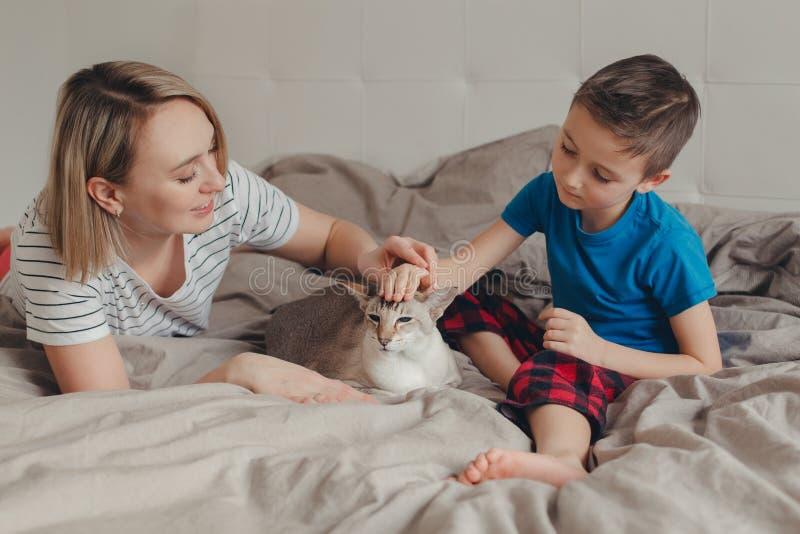 Familienmutter und -sohn, die zu Hause auf Bett im Schlafzimmer sitzen und orientalische Punkt-farbige Katze streicheln lizenzfreie stockbilder