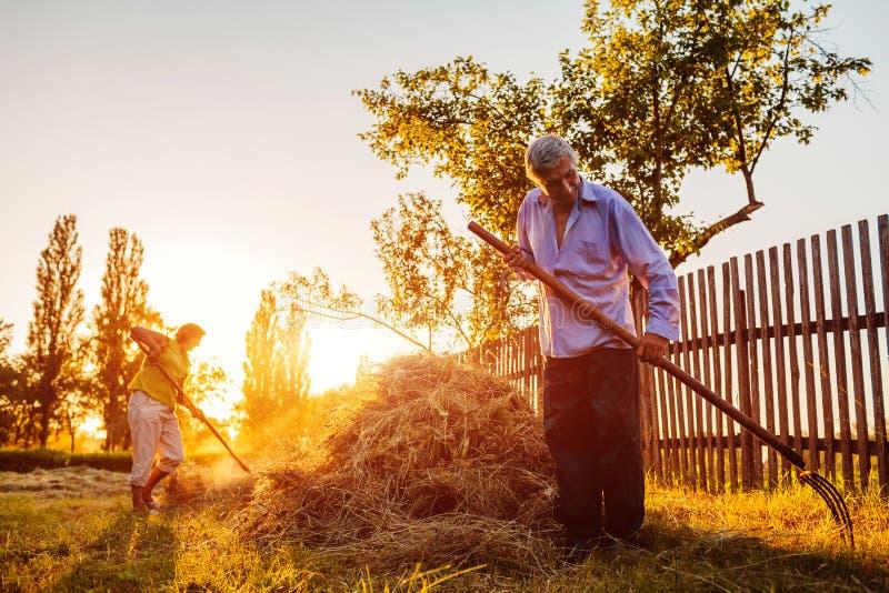 Familienpaare von Landwirten erfassen Heu mit Heugabel bei Sonnenuntergang in der Landschaft Fleißiger Leutechat lizenzfreie stockfotos