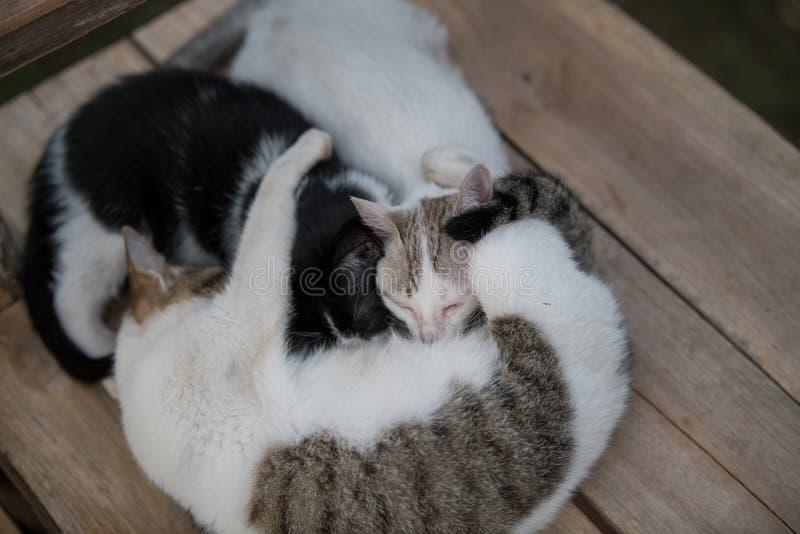 Familienschlafen der Katze drei lizenzfreie stockfotos