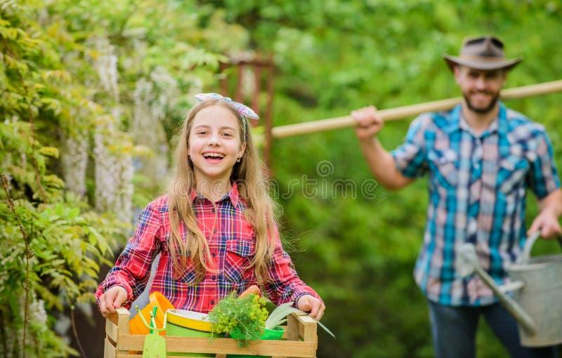 Familiepapa en dochtermeisje die installaties planten Dag bij landbouwbedrijf Populair in tuinzorg Het planten van bloemen stock foto