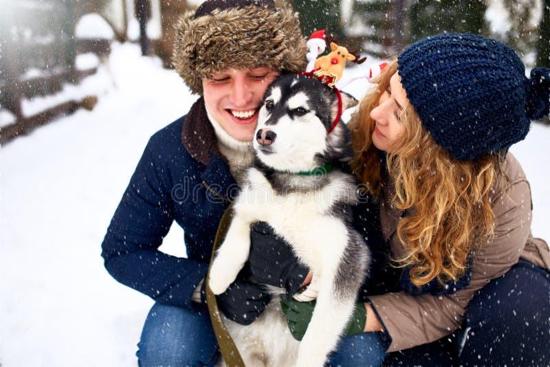 Familieportret van leuk gelukkig paar die met hun malamutehond koesteren die van Alaska man gezicht likken Het grappige puppy dra stock afbeeldingen