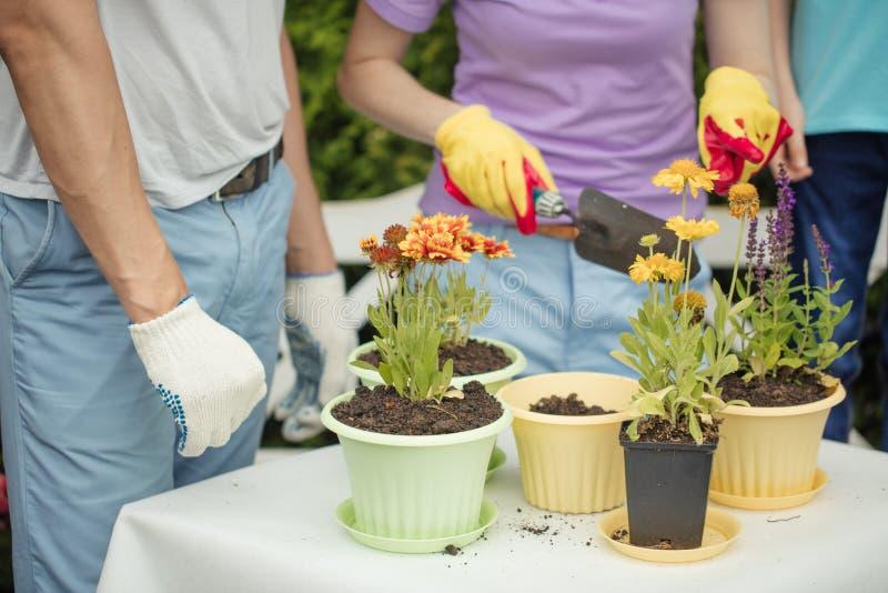 Familietuinlieden die met jong geitje bloemen in potten met grond in landbouwbedrijf planten stock foto