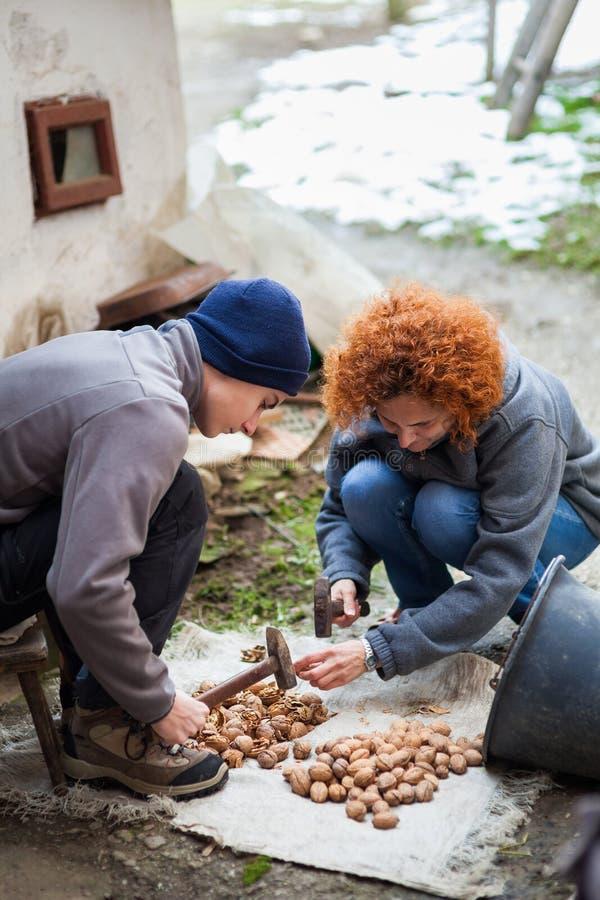 Familj av bönder som krossar valnötter fotografering för bildbyråer