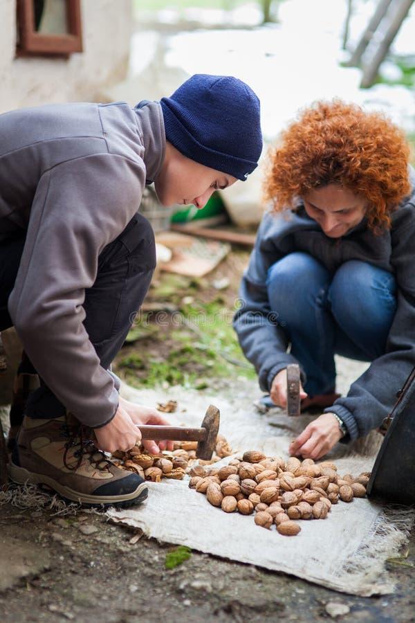 Familj av bönder som krossar valnötter arkivfoto