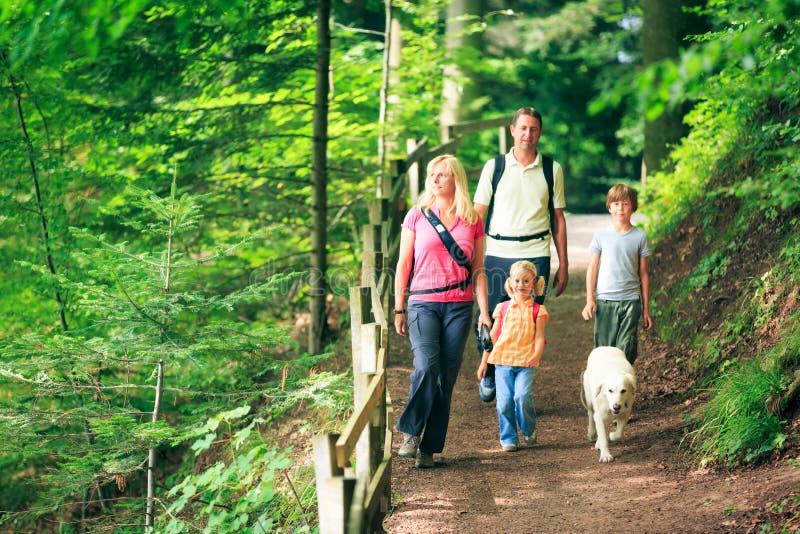 Familj av fyra som fotvandrar arkivfoto