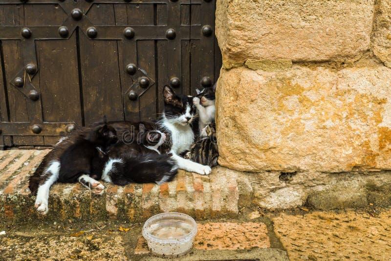 Familj av katter - Ronda royaltyfria foton