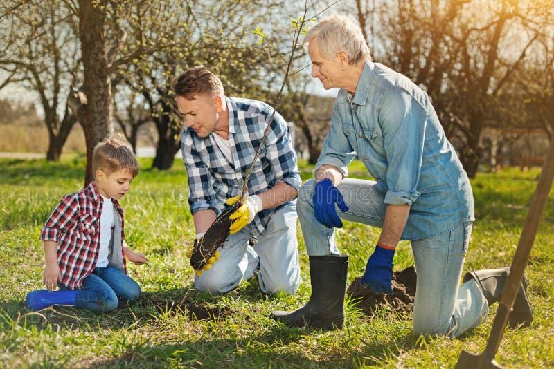Familj av tre utvecklingar som planterar trädet i trädgården royaltyfri bild