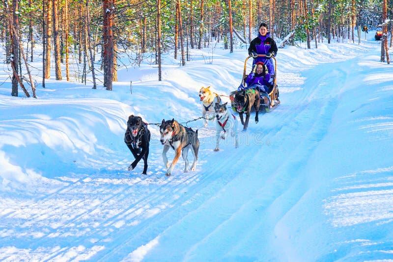 Familj i Husky Dogs Sled i Rovaniemi i Finland Lapland royaltyfri foto